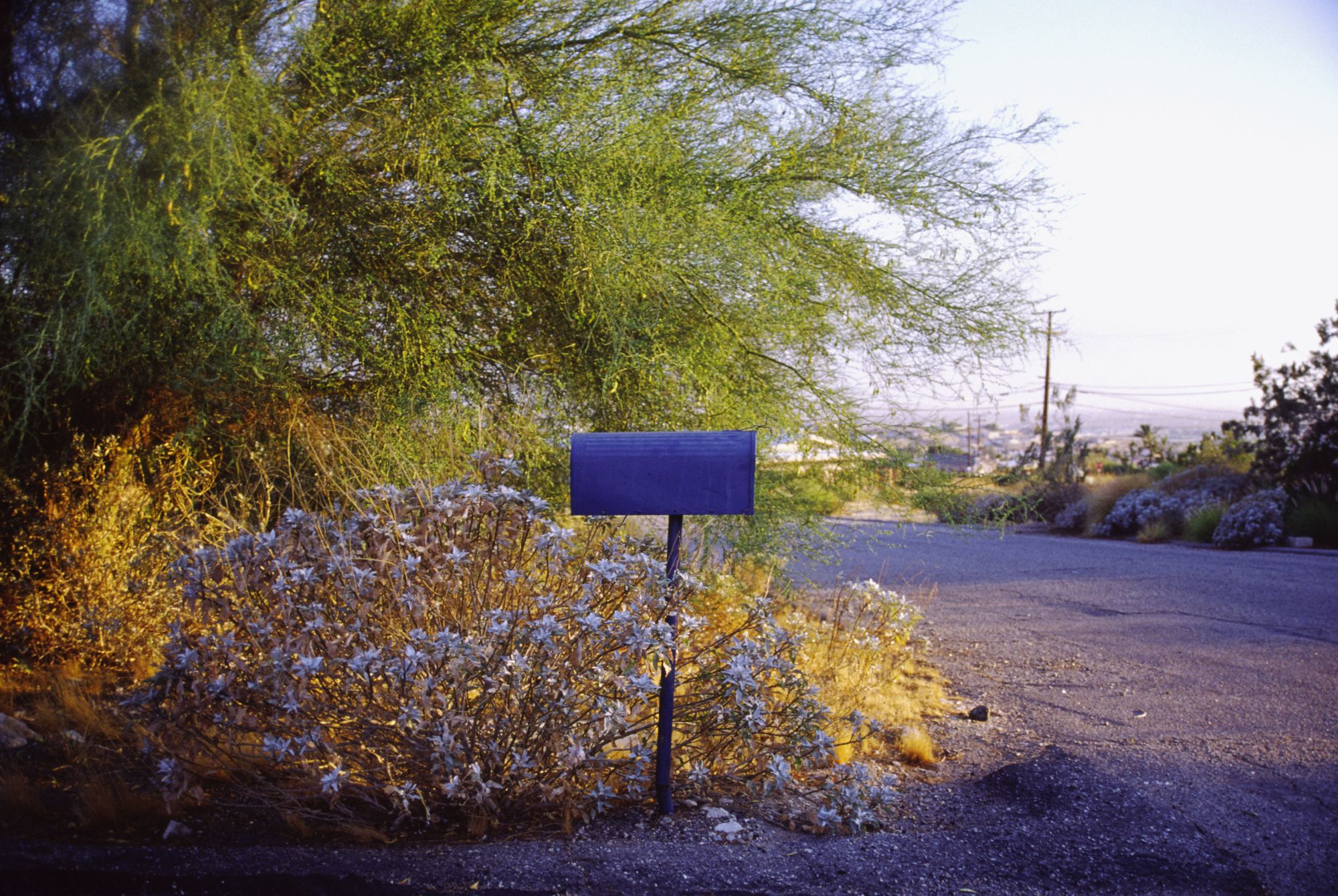 Photo of a mailbox seen from the side in the midst of flowers. The box looks onto an empty road at either sunrise or sunset. There's a great line of trees behind it and a view of a city in the distance.